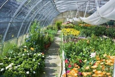 Webquest primaria ucam Viveros y jardines